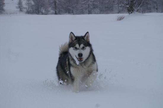Première course dans la neige